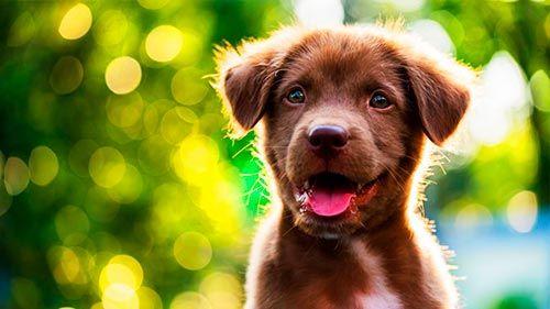 Pack premium cachorro canino