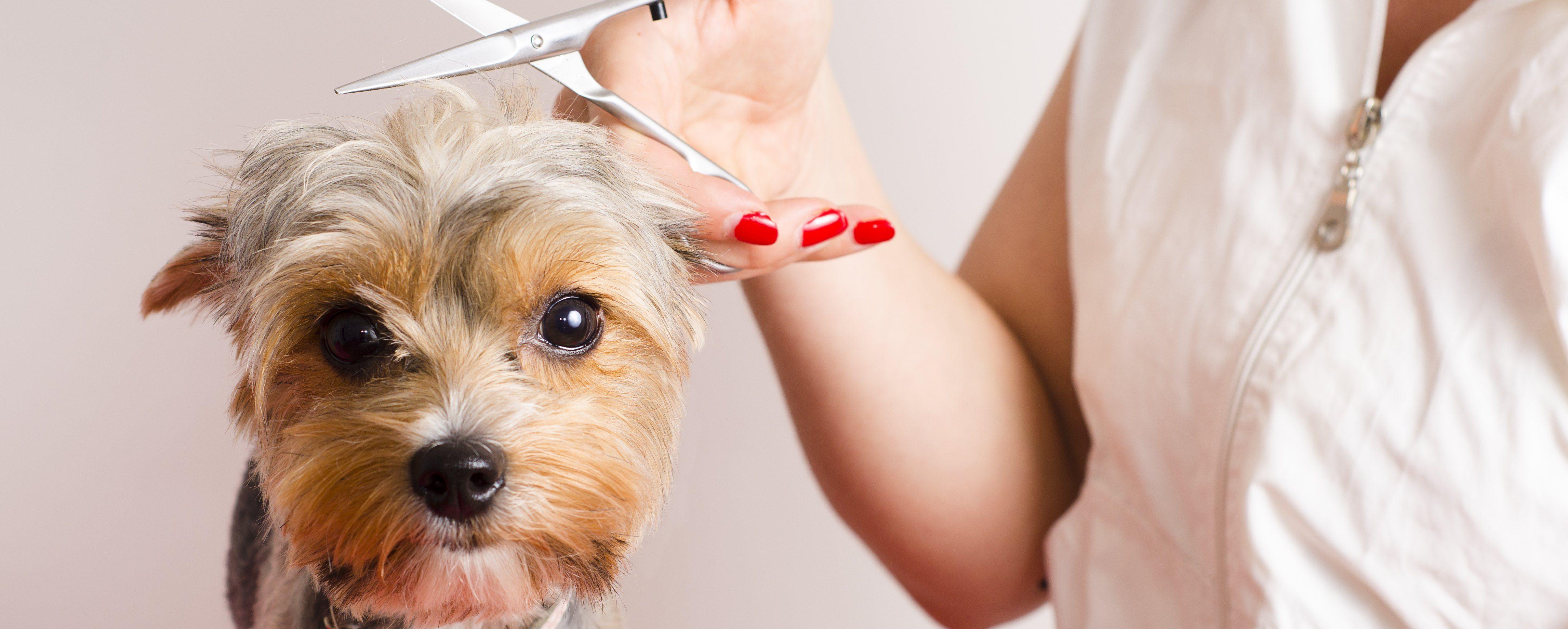Descubre los servicios de peluquería canina en Madrid