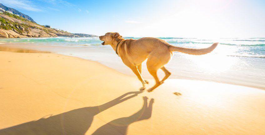 Playa para perros en España